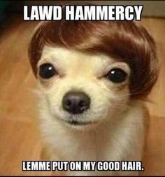 lawdhammercydog